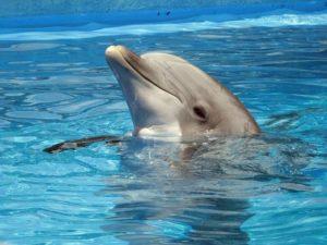 VR bril dolfijn