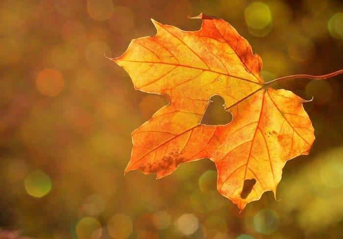 Een herfstblad met gat in de vorm van een hart