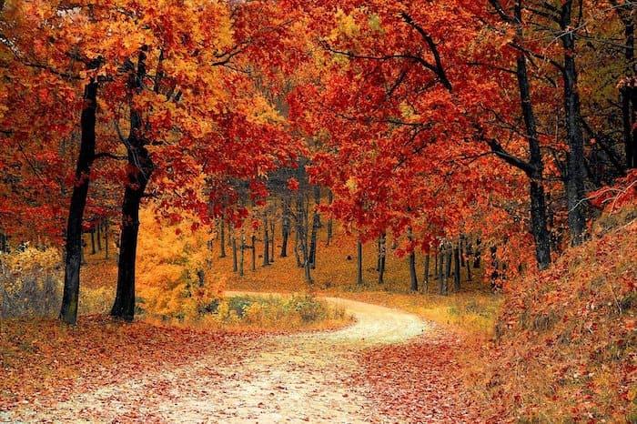 Weg door het bos tijdens de herfst